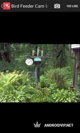 Онлайн камеры видео наблюдения